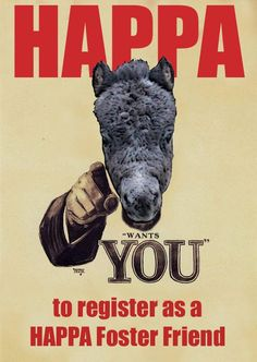 HAPPA NEED YOU!! We would like to appeal to all those equine enthusiasts with the time, energy and commitment to come forwards and register as a HAPPA Foster Friend.