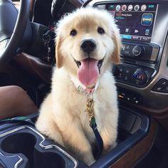 Ugh look at this happy pooch