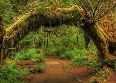 Forêt humide de Hoh État de Washington, États-Unis