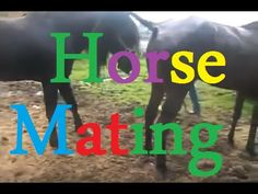 Mating wild Moments | Funny horse with music | Natural wildlife | Horse matting | Wild Documentary - YouTube