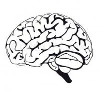 Find brain drawing stock images in HD and millions of other royalty-free stock photos, illustrations and vectors in the Shutterstock collection. Human Brain Drawing, Close Up, Tooth Fairy, Human Body, Coloring Pages, Royalty Free Stock Photos, Drawings, Illustration, Pictures