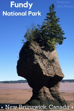 This guide to Fundy National Park covers its best hiking, camping, and more. Plus, as one of the least-visited Canadian national parks, it's never crowded. Canada Travel, Travel Usa, Slow Travel, Travel Tips, East Coast Travel, America And Canada, Beautiful Park, Canada Day, New Brunswick