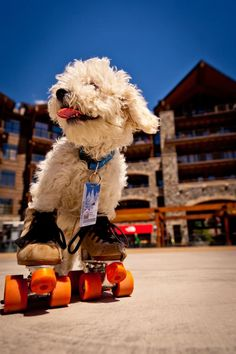His name is MarshMellow and he lives in North Star Ski Village - looks like he loves to roller skating.  (Living at a ski village ... does he ice skate in the winter?)