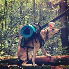 I need a dog to carry some of my stuff down the High Sierra Trail...