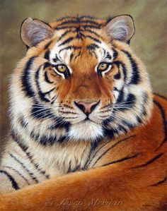 I want this as a tatoo! Tiger symbolizes Loyalty, Courage, Generosity, and Strength