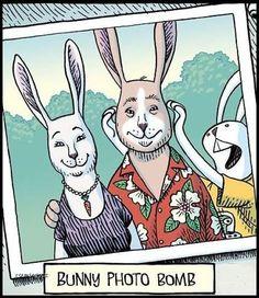 Rabbit Humor