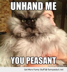 Google Image Result for http://funnyasduck.net/wp-content/uploads/2012/12/funny-colonel-meow-meme-cat-angry-grumpy-unhand-me-peasant-pics.jpg