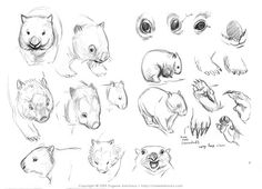 Fox Drawing, Drawing Prompt, Drawing Skills, Drawing Tips, Cute Sketches, Drawing Sketches, Sketch Art, Sketching, Wombat Pictures