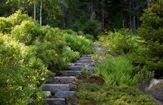 Residential Steep Slope Landscaping Design, Pictures, Remodel, Decor and Ideas - page 7
