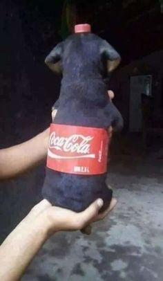 """Pet Owners Are Turning Their Dogs into Refreshing """"Soda Pups"""" for Adorable Meme"""