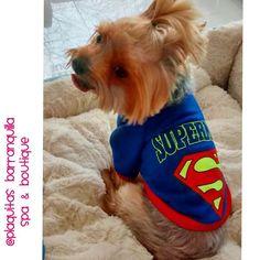 SUPER MAN COLLECTION Visitanos! Calle 82 # 42 G -06 LOCAL 4 !! 3005135313-3203046 !! Horario LUNES - DOMINGO Y FESTIVOS 8 am - 7 pm en Barranquilla ! envios a toda  #COLOMBIA // we also ship inside #usa  #plaquitasbarranquilla #petstagram #dogdress #dogfashion #petboutique #cachorro  #petstore #perritoscolombia #doglover #doggrooming #doglove #dogshirt #petshop #maicao #cali #medellin #dogspa #petspa #cartagena #bogota #barranquilla #doggrooming #spacanino  #dogboutique #yorkie #yorkshire by…