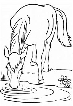 290 Best Horses Images On Pinterest Coloring Pages Colouring