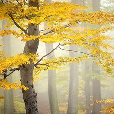 autumn   tomas morkes