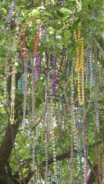 Mardi Gras beads draped in the trees after parades.