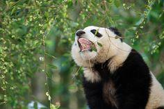 Mr. Wu shows off his teeth.