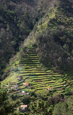 Madeiran Terraces, Portugal