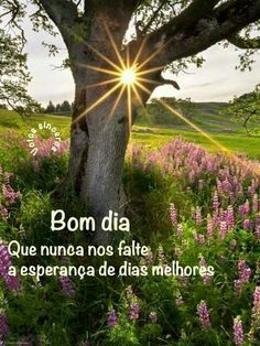 Bom dia com esperança.......