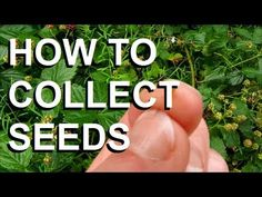How To Collect Seeds (Free Food & Flowers)