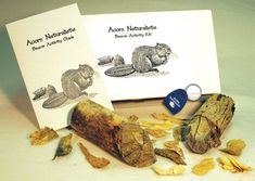 KIT: Beaver Activity Kit - The branches gnawed by beaver serve as fascinating tools for the study of beaver behavior and anatomy. Science Curriculum, Children's Literature, Student Learning, Forests, Social Studies, Branches, Behavior, Anatomy, Trees