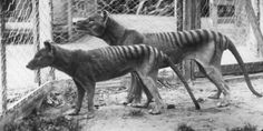 11 Animals That Are Now Extinct... Thanks To Humans