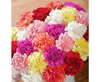 Carnations. May be simple but very sweet