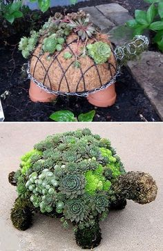 Schildkröte mit Sukkulenten | Materialien: 4 Tontöpfe, 1 Blumenampel mit Kokosmatte sowie Hasendraht und Moos | Garten | DIY