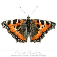Small Tortoiseshell Butterfly © 2012 ~ annamasonart.com