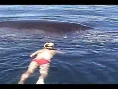 Wow....Humpback Whale Shows AMAZING Appreciation After Being Freed From Nets