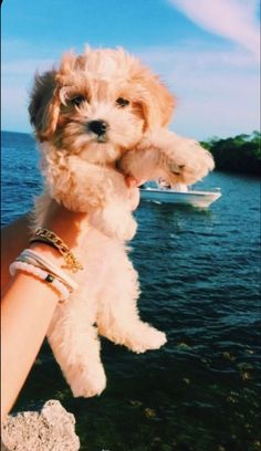 Super Cute Puppies, Baby Animals Super Cute, Cute Baby Dogs, Cute Little Puppies, Cute Dogs And Puppies, Cute Funny Animals, Doggies, Funny Dogs, Puppies Puppies