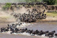 Serengeti migration - Claudia Uribe/Claudia Uribe/Getty Images