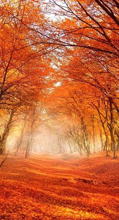 "bellasecretgarden: "" Autumn Trees """