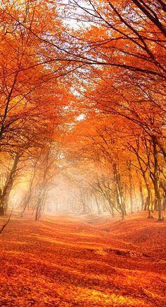 autumn trees                                                                                                                                                                                 More