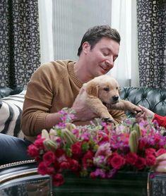 Jimmy Fallon, Labrador Retriever, Animals, Labrador Retrievers, Animales, Animaux, Animal, Animais, Labrador