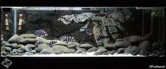 cichlid aquarium setup - Google Search