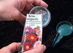 Quand semer et bouturer les arbustes et les fleurs du printemps ?