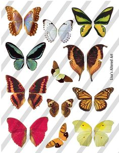 Digital Collage Sheet  Butterfly Fairy Wings by lisasalteredart