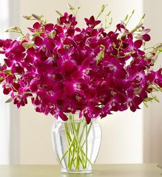 These exotic deep purple Dendrobium orchids will bring the outdoor beauty of the tropics to you!