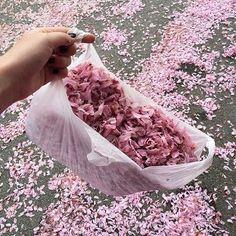 Imagen de pink, flowers, and aesthetic