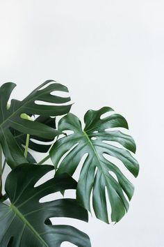 Plant Wallpaper, Modern Wallpaper, Nature Wallpaper, Bedroom Wallpaper, Wallpaper Backgrounds, Wallpapers, Kitchen Wallpaper, Wallpaper Decor, Wallpaper Ideas