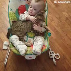 61 Ideas For Cute Children Funny Cats Cute Funny Animals, Cute Baby Animals, Animals And Pets, Funny Cats, I Love Cats, Crazy Cats, Gato Gif, Pet Birds, Animals Beautiful