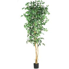 Nearly Natural 5210 Ficus Silk Tree, 7-Feet, Green Nearly Natural http://www.amazon.com/dp/B001DQAZYQ/ref=cm_sw_r_pi_dp_-SX8vb17E7RXN