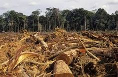 australia deforestation - Google Search