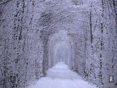Winter in The Tunnel of Love, Ukraine.  It is a section of industrial railway located near Klevan, Ukraine, that links it with Orzhiv. It is a railway surrounded by green arches and is three to five kilometers in length. It is known for being a favorite place for couples to take walks.  The  Kleven train tunnel is a beautiful example of what happens when nature is allowed to grow freely around manmade infrastructure.