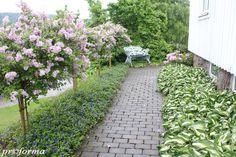 Syringa Palibin and Vinca Minor growing in my garden! Indian House Plans, Syringa, Indian Homes, Outdoor Living, Outdoor Decor, Landscaping Plants, Garden Paths, Garden Inspiration, Beautiful Flowers