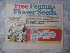 Millbrook Bread Ad Snoopy Peanuts