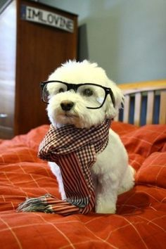 Hipster dog is unimpressed with your lack of style