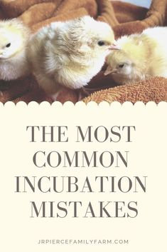 How to be successful at first time incubation Diy Herb Garden, Herb Garden Design, Vegetable Gardening, Container Gardening, Gardening Tips, Garden Ideas, Raising Backyard Chickens, Keeping Chickens, Building Raised Beds