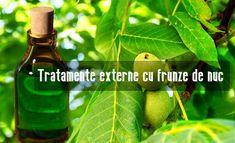 Remedies, Varicose Veins, Plant