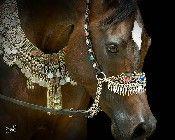 Arabian horse in Botswana