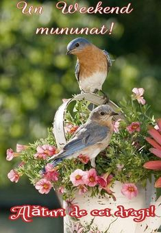 Pretty Birds, Love Birds, Beautiful Birds, Simply Beautiful, Beautiful World, Beautiful Gorgeous, Pretty Flowers, Pink Flowers, Shabby Chic Bedrooms